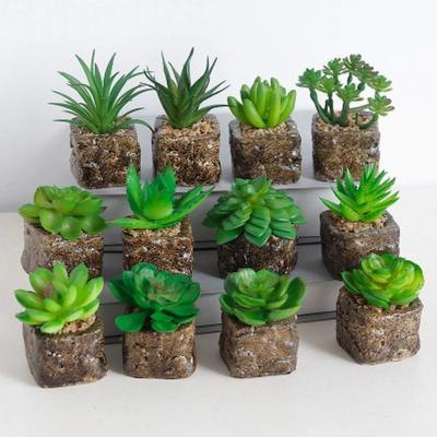 Houseweet 1pc Mini Plantas Suculentas Artificiales Plantas De Cactus
